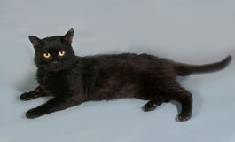 Black cat with yellow eyes lying on gray Royalty Free Stock Photo