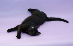 Black cat with yellow eyes lying on purple Royalty Free Stock Images