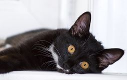 A black cat lying window. A black cat with yellow eyes lying window sill Stock Photo