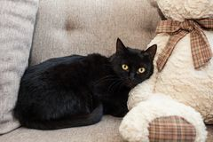 Black cat with yellow eyes in a new home. Mental and emotional problems of cats stock photos