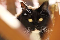 Black cat. Black cat with yellow eyes. royalty free stock image
