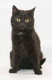 Black cat with yellow eyes sits wearily looking Stock Image