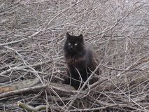 Black cat with yellow eyes sitting on the branches of trees Royalty Free Stock Images