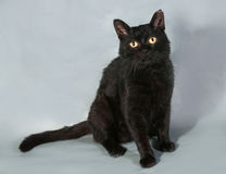 Black cat with yellow eyes sitting on gray Stock Photo