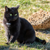 Black cat with yellow eyes Stock Photos