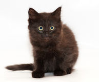Black cat with yellow eyes sitting, looking anxiously. At white-gray background Royalty Free Stock Photography