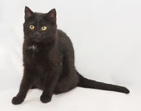 Black cat with yellow eyes sitting, looking in disbelief Stock Photos