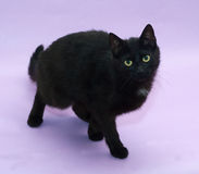 Black cat with yellow eyes sneaks up on purple Royalty Free Stock Photo