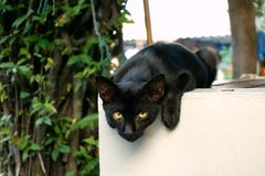 A black cat. With yellow eyes is staring at you Royalty Free Stock Photography