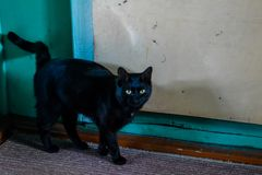 The black cat with yellow eyes. royalty free stock photography