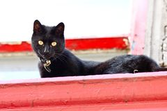Black cat with yellow eyes on a window sill. Black cat with yellow eyes sitting on a red windowsill and looking into the camera lens Royalty Free Stock Image