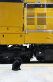 Black cat. And yellow train stock image