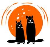 black cats Stock Photography