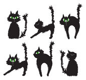 Black cats Royalty Free Stock Photos