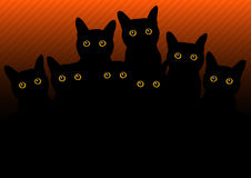 Black cats Stock Photos