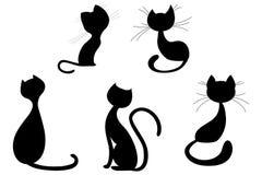 Black cats Stock Image