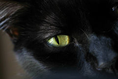 Black Cats Eye. Black cats wide green eyes contrast really well with his fur Stock Image
