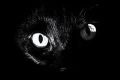 Black cats eyes. Close up of a black cat`s eyes surrounded by darkness, staring at viewer. high contrast black and white image Royalty Free Stock Images