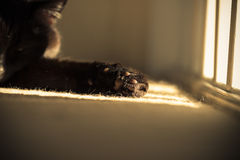 Black Cats' Paw In Sunbeam. A black cat stretches out her paw into a bright golden sunbeam. Her restful face can just about be made out on the left of the frame Stock Image