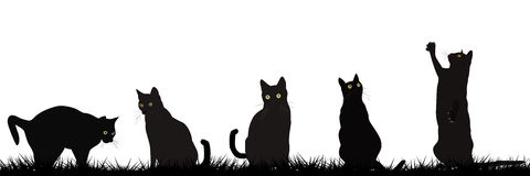 Black cats playing outdoor Royalty Free Stock Photo