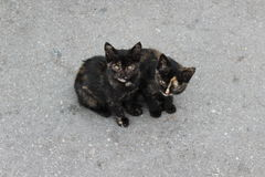Black cats. In the road Stock Image