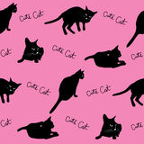 Black cats Stock Images