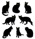 Black cats silhouette Stock Photography