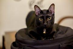 Cats sleep in black backpacks royalty free stock photos
