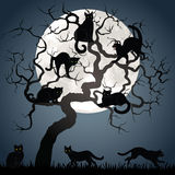 Black cats on tree Royalty Free Stock Images