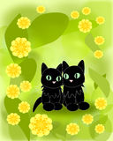 Black Cats and yellow Flowers Royalty Free Stock Image