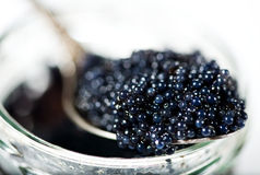 Black caviar Royalty Free Stock Images