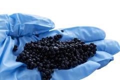 The black caviar Royalty Free Stock Photography