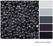 Black Caviar Palette Royalty Free Stock Image