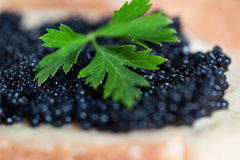Black caviar on a slice of bread with parsley Royalty Free Stock Photos