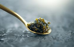 Black caviar in a spoon on dark background. Natural sturgeon black caviar closeup. Delicatessen royalty free stock photos