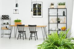 Black chairs against white wall. Wooden table with black chairs standing against white wall in modern dining room with plants Stock Photos