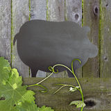 Black Chalkboard Pig Wood Backdrop. Black Chalkboard Pig Advertising Space Over Distressed Grunge, Vintage Aged Green Moss Covered Wood Background With Leaves Stock Photo