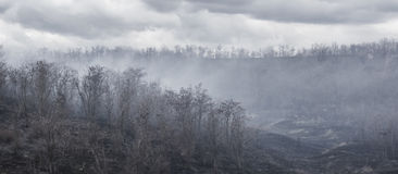 Black charred trees and grass in the smoke after the fire in the valley the gloomy clouds background. Stock Images