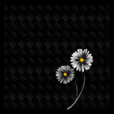 Black Checks Flower. A white daisy on a black chequered background Royalty Free Stock Photography