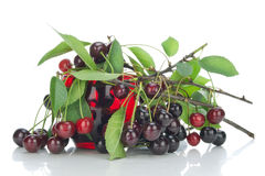 Black cherries branches Stock Photos