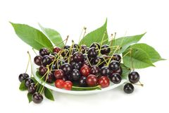 Black cherries on plate Royalty Free Stock Image