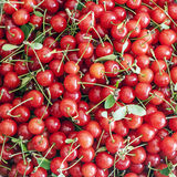 Black cherries Royalty Free Stock Image