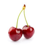 Black cherries Stock Photos