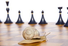 Black chess and snail on chessboard Royalty Free Stock Image