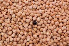 Black chick pea Stock Photo