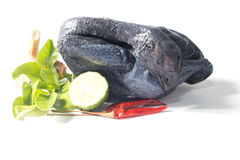 Black Chicken Stock Photography
