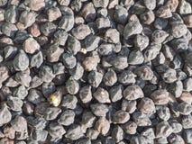 Black chickpeas Stock Image