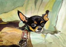 Black chihuahua watercolor painting Stock Photos