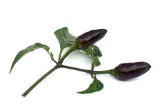 Black chilli with leaves Royalty Free Stock Photos