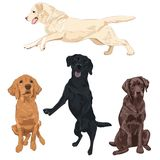 Labrador dogs isolated on white background. Black, chocolate and yellow labrador breed canines vector illustration Royalty Free Stock Photos